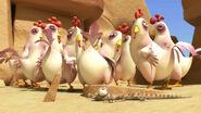 Oscarhiddingfromchickens
