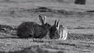RabbitBerlin 018