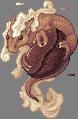 Coffee dragon adult
