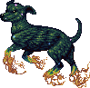 Galaxy dog adult
