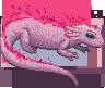 Salamander ifrimander adult