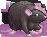 Rat ash female