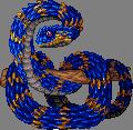Jewelviper ocean adult