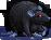 Rat black velvet female