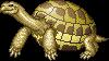 Shelled Tortoise adult f