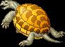 Shelled Tortoise adult m