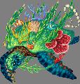 Haven turtle adult