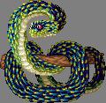 Jewelviper regal adult