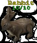Brown Rabbit Colorless