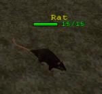 Creature Rat