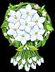 Shield Jasmine Shield