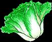 Item Cabbage