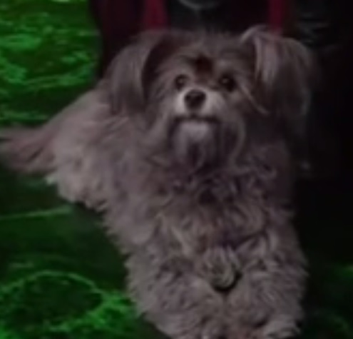 Toto | Once Upon a Time Wiki | FANDOM powered by Wikia