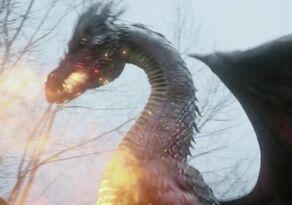 DragonLily