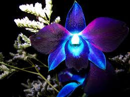File:Allutherianorchid.jpg