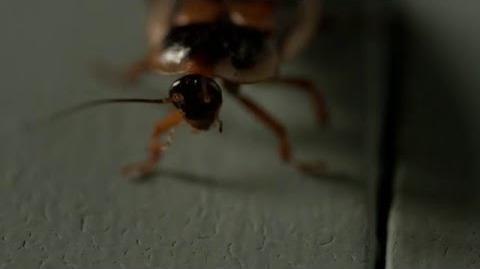 Outcast Season 1 Teaser Cockroach (Cinemax)