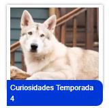 Curiosidades-T4-tn