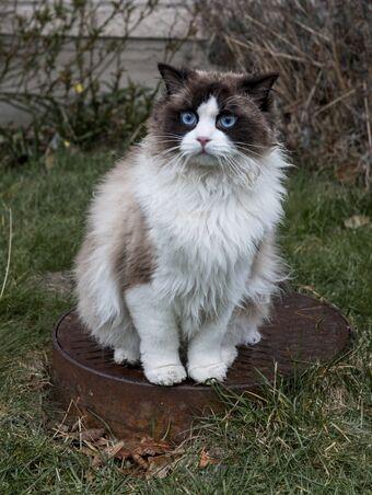 Cat Annoyance | A Man Called Ove Wiki | Fandom