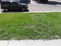 Lawn, part 3