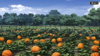 Pumpkin Patch (Mass for the Dead)