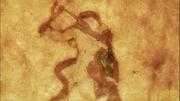 Small Fang Lizardman