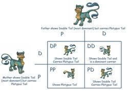 Punnet-square feline-double-tail