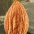 AlmondThumb