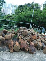 木頭 @ 大圍松柏路世界花園來往隆亨邨之樓梯