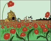 Poppies~2