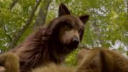 Clay and Elena in their Wolf forms