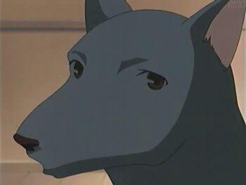 2001 Animal