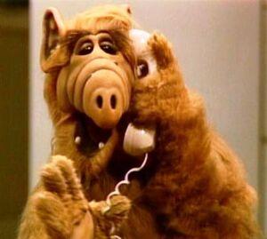 Alf 3