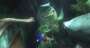SharkPledge