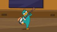 Ornitorrinco banjolista