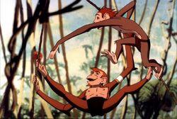 A-monkey-s-tale