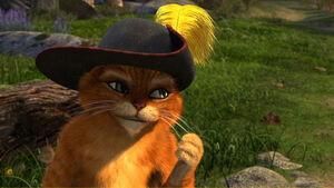 Puss 3