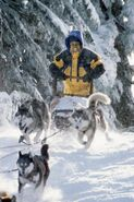 Ted mushing the dogs