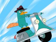 Phineas-y-ferb-perry-25654