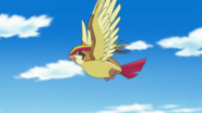 Pidgeot Anime