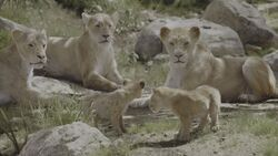 Lion King 2019 Screenshot 0559