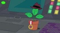 Planty la maceta
