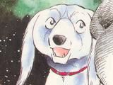 Cross (Saluki Dog)