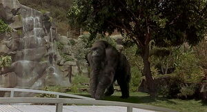 Mighty-joe-young-disneyscreencaps.com-5367