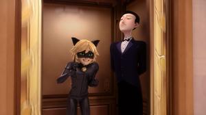 Mr. Pigeon - Cat Noir 00