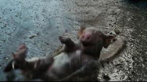 Wilbur slipping n sliding in the mud