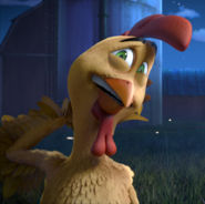 Toto rooster
