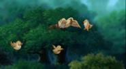 Birds taking Flying lessons