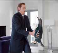 Mr. Popper recieves penguin in mail