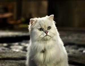 Stuart-little-snowbell-persian-cat