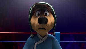 Bodi seeing the boxer